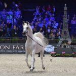 Championnat du Monde du cheval Arabe, 40e Edition ! ( + Vidéo )